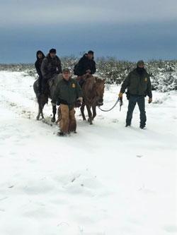 bp-winter-horse-250px